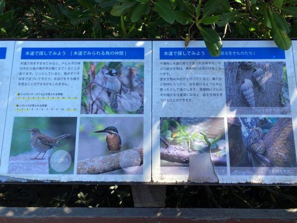 漫湖水鳥・湿地センター
